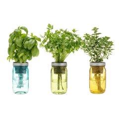 Uncommon Goods Herb Garden